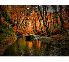 I'll Take It ~ Fall Colors On Whittaker Creek ~ Photographic Print