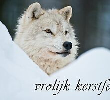 Arctic Wolf Christmas Card - Dutch - 14 by WolvesOnly