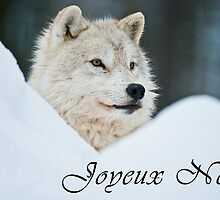 Arctic Wolf Christmas Card - French - 14 by WolvesOnly