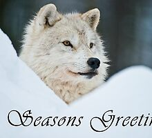 Arctic Wolf Seasons Card - 14 by WolvesOnly