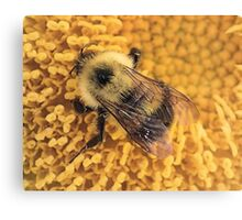 Bumble Bee '14 Canvas Print