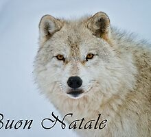 Arctic Wolf Christmas Card - Italian - 15 by WolvesOnly