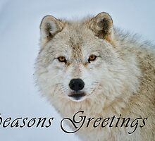 Arctic Wolf Seasons Card - 15 by WolvesOnly
