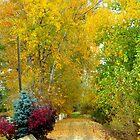 A Walk Into Autumn by Diane Arndt