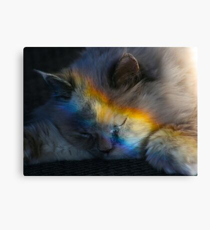 Napping in a Rainbow Canvas Print