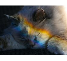 Napping in a Rainbow Photographic Print