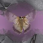 Winged One in Lilac by Donuts