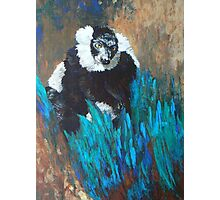 Primate Of The Madagascan Rainforest Photographic Print