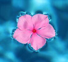 Floating Flower by Bob Hardy