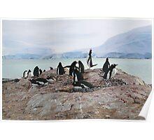 Gentoo Penguin Rookery on Trinity Island, Antarctica Poster