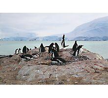 Gentoo Penguin Rookery on Trinity Island, Antarctica Photographic Print