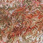 Ferns: Auburn Wild by Susan Nixon