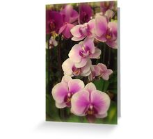 Purple Orchids for My Love Greeting Card