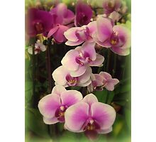 Purple Orchids for My Love Photographic Print