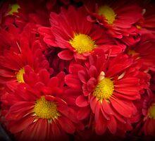 Orange Delight - Bright and Beautiful Spring Blossoms by Miriam Danar