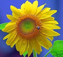 A Striking Sunflower by jozi1