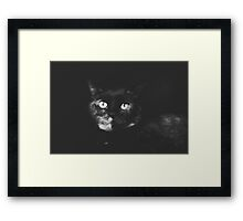 House Panther Framed Print