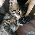 Talk to the paw, i'm sleeping! by Jaeda DeWalt