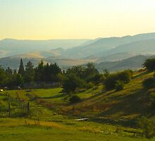 Morning on the Ranch by Barbara  Brown