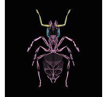 Ant Line Art Illustration Photographic Print