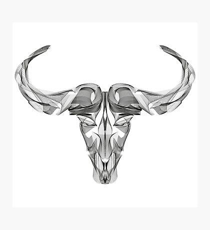 Animal Skull Line Art Photographic Print