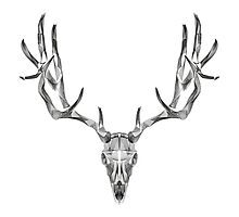 Deer Skull Animal Line Art Photographic Print