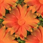 Orange Daisy by Judi FitzPatrick