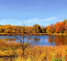 Minnesota Gold by shutterbug2010