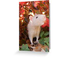 Peek into the World Greeting Card