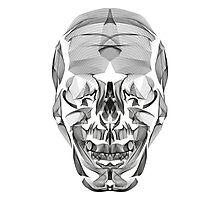 Human Skull Line Art Illustration Photographic Print