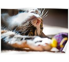Cat Toy Poster