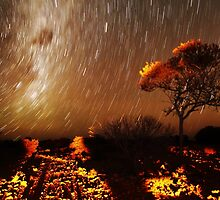 Star Trails  by Ann Marie  Barnes