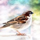 Sparrow beauty 0004 by kevin chippindall