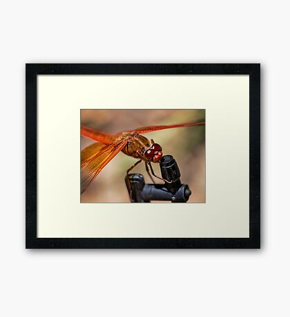 How do you turn this thing on? Framed Print