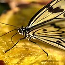 A Pineapple Singapore Sling for Butterflies. by Larry Lingard-Davis