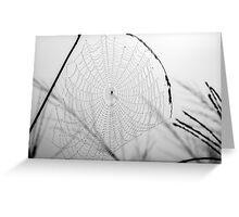 Dewdrops & Spiders Greeting Card