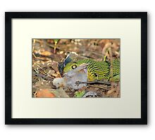 Tree-Snake Dinner - Nature's Cycle of Life Framed Print