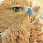 Tawny Eagle Anger - Wildlife Humor by LivingWild