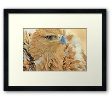 Tawny Eagle Anger - Wildlife Humor Framed Print