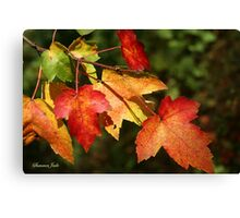 Autumn Maple Leaves ~ Nature's Work Canvas Print