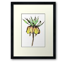 Fritillaria Imperialis Ink drawing Framed Print