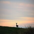 Doe in the Field at Sunset by TrendleEllwood