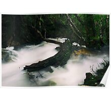 Knyvet Falls in Cradle Mountain Poster