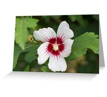 hibiscus in spring Greeting Card