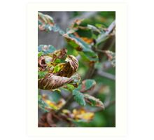 colorful leaves in the forest Art Print