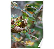colorful leaves in the forest Poster