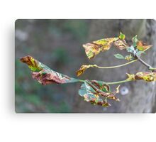 colorful leaves in the forest Metal Print