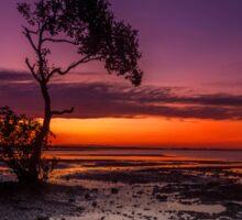 Mangrove Delight - Wellington Point Qld Australia Sticker