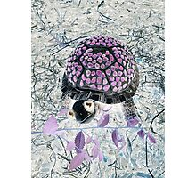 Mystical Turtle Photographic Print