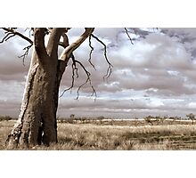 Just Down The Road From The Black Stump Photographic Print